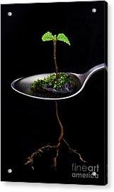 Strange Spring Acrylic Print by Masako Metz