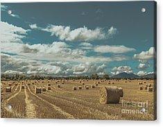 Straw Bales In A Field 3 Acrylic Print