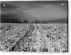 Straw Fields Acrylic Print
