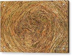 Straw Acrylic Print by Michal Boubin