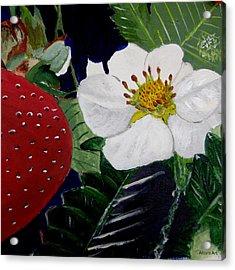 Strawberry And Blossom Acrylic Print by Brenda Alcorn