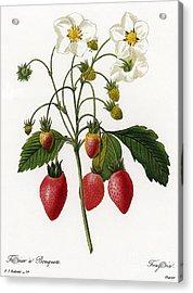 Strawberry Acrylic Print by Granger