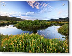 Acrylic Print featuring the photograph Strawberry River With Summer Flowers. by Johnny Adolphson
