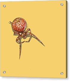 Strawberry Spider Acrylic Print by Jude Labuszewski