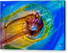 Streaker Acrylic Print by Omaste Witkowski