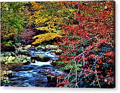 Stream In Autumn Acrylic Print by Kevin  Sherf