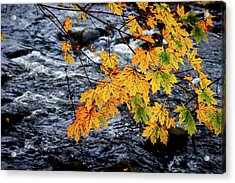 Stream In Fall Acrylic Print