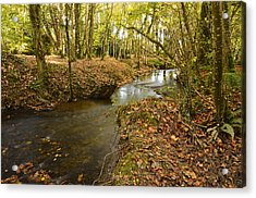 Stream In The Woods Acrylic Print