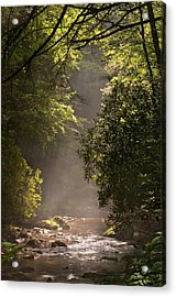 Stream Light Acrylic Print by Steve Gadomski