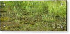 Stream Reflections Acrylic Print