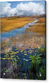 Acrylic Print featuring the photograph Stream Through The Everglades by Debra and Dave Vanderlaan