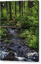 Acrylic Print featuring the photograph Streaming by Kendall McKernon