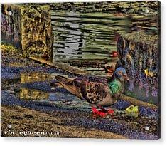 Street Walker Acrylic Print
