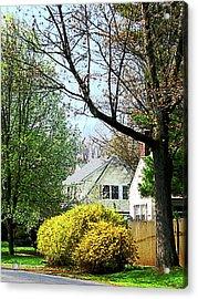 Street With Forsythia Acrylic Print by Susan Savad