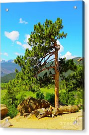 Strength Acrylic Print by Aimee Mouw