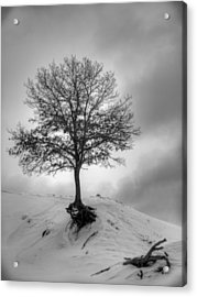Strength And Hope 2011 Acrylic Print