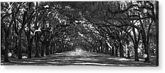 Strength In Numbers Wormsloe Plantation Art Acrylic Print