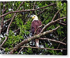 Strength Acrylic Print by JAMART Photography