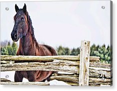 Acrylic Print featuring the photograph Strength by Traci Cottingham