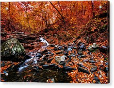 Acrylic Print featuring the photograph Stress Relief by Edward Kreis