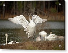 Stretch Your Wings Acrylic Print