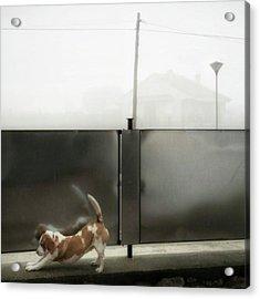 Stretching Dog #dogsofinstagram #dogs Acrylic Print