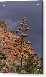 Stretching Into A Threatening Sky Acrylic Print