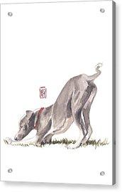 Stretching Italian Acrylic Print by Debra Jones