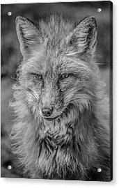 Striking A Pose Black And White Acrylic Print