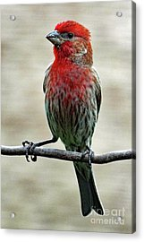 Striking A Pose Acrylic Print by Cindy Treger