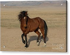 Striking A Pose Acrylic Print by Nicole Markmann Nelson