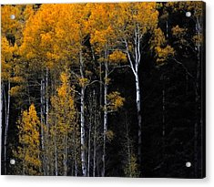 Striking Gold Acrylic Print