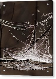 Acrylic Print featuring the photograph String Of Pearls 1 by Scott Hovind