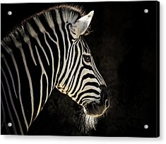 Striped Acrylic Print by Animus Photography