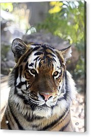 Striped Beauty Acrylic Print by Marilyn Hunt