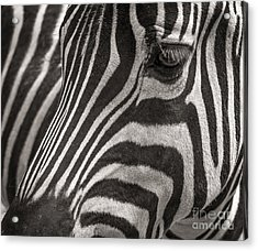 Striped Beauty Acrylic Print by Sherry Davis
