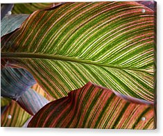 Striped Canna Lily Leaves Acrylic Print