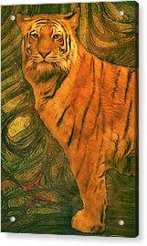 Striped Cat Acrylic Print by Jack Zulli