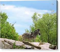 Mama, Who's That Idiot Taking My Picture? Acrylic Print