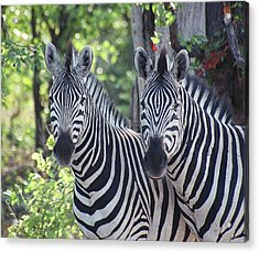 Stripes And Ovals Acrylic Print