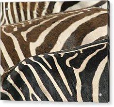 Stripes Acrylic Print by Donald Tusa