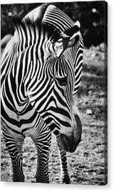 Stripes  Acrylic Print by Saija  Lehtonen