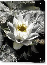 Strokes Of The Lily Acrylic Print