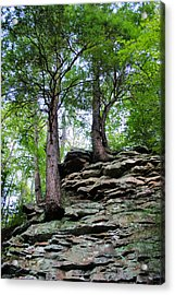 Strong Roots Acrylic Print by Kristin Elmquist