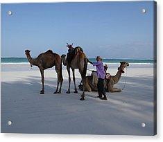 Stubborn Wedding Camels Acrylic Print