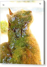 Stuck In Cat Acrylic Print