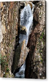 Stuck In The Middle Acrylic Print by Christine Till