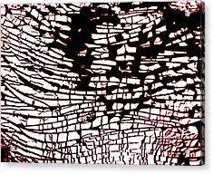 Study For Na Four Wave Acrylic Print by Kika Pierides