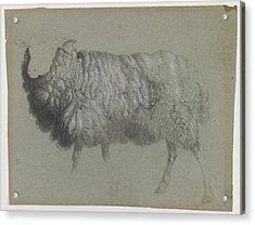 Study Of A Ewe Acrylic Print