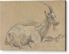 Study Of A Goat Acrylic Print